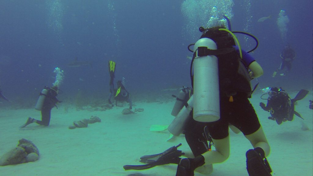diving feeding sharks, Should You Participate in a Shark Feeding Dive