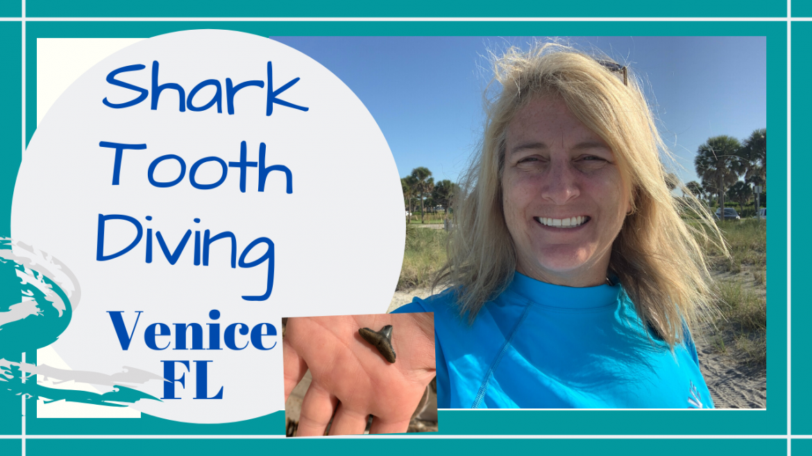 , SHORE DIVING VENICE FLORIDA FOR SHARK TEETH // ALHAMBRA SITE // NORTH SERVICE PARK ROAD // Deep Water Happy